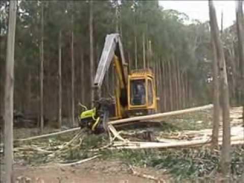 قطع الأشجار في استراليا ..