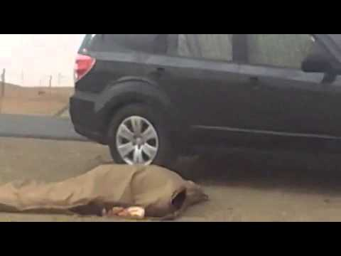 """فيديو : شاب سعودي يسخر من نظام ساهر """" النوم مايجيب فلوس ، ارقد وتجيك فلوووس """""""