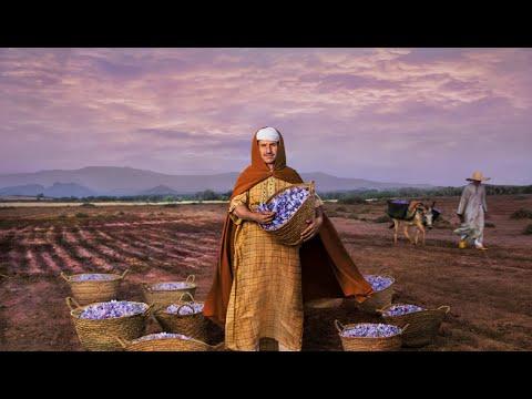 """وثائقي : """" الزعفران """" الذهب الأحمر الذي تنتجه مدينة تالوين المغربية !"""
